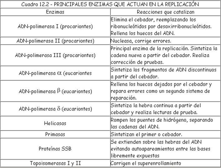 DNA POLIMERASA EN PROCARIOTAS EPUB DOWNLOAD